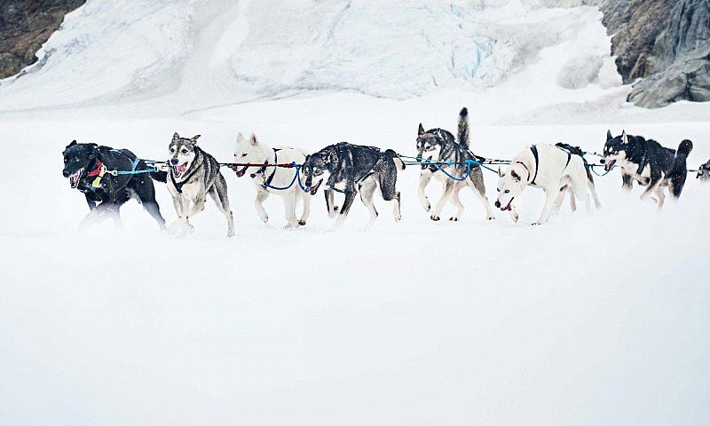 Alaska Dog Sled Excursion
