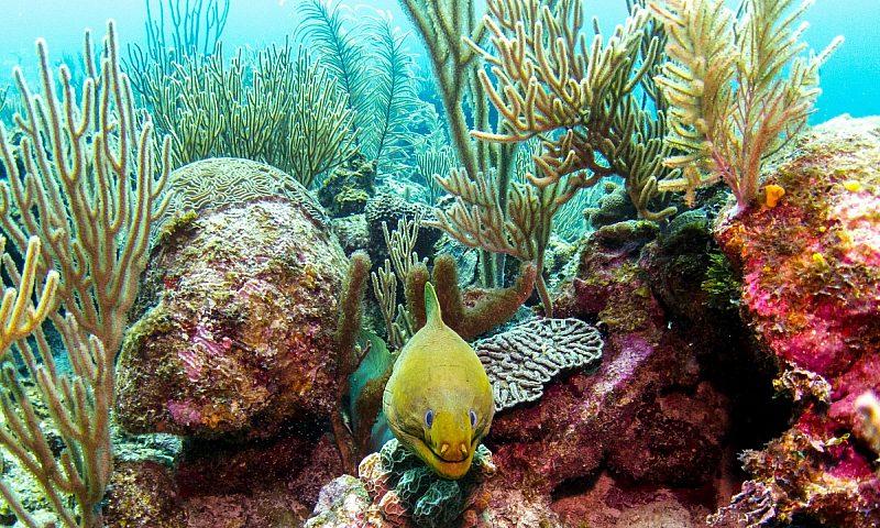 Coral reef Belize