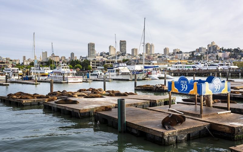 Sea Lions on Pier 39 in Fishermans Wharf