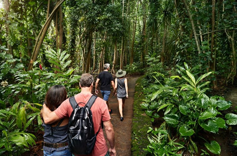 Two couples on a trek through Hawaiian rainforest