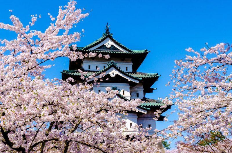 Blossom in front of Hirosaki Castle