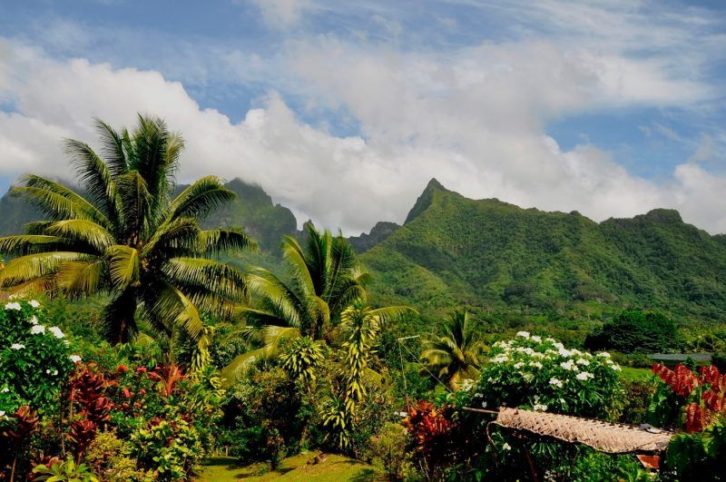 Lush vegetation and palm trees in Raiatea in French Polynesia