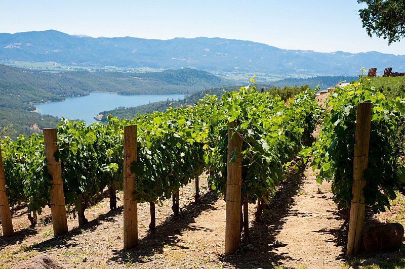 Napa, California wine fields