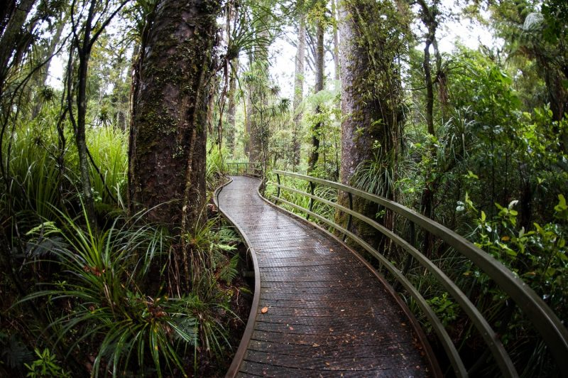 New Zealand walkway in forest