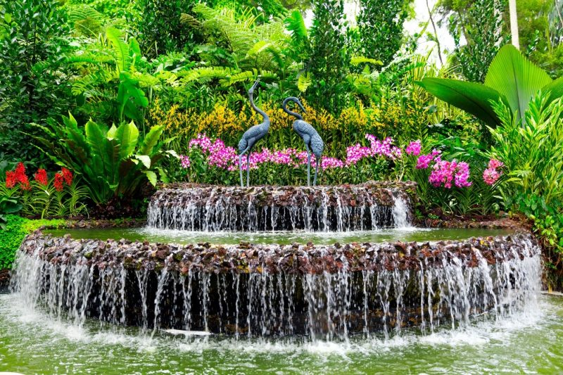 Beautiful pink flowers and a waterfall at the National Orchid Garden in Singapore