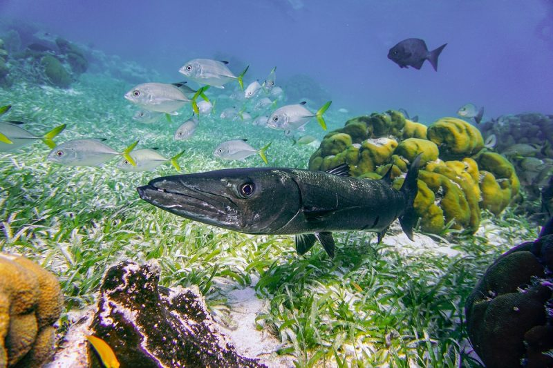 Fish in reef in Belize