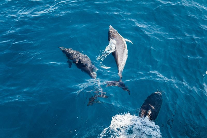 Spot Bottlenose Dolphins off the coast of Sardinia