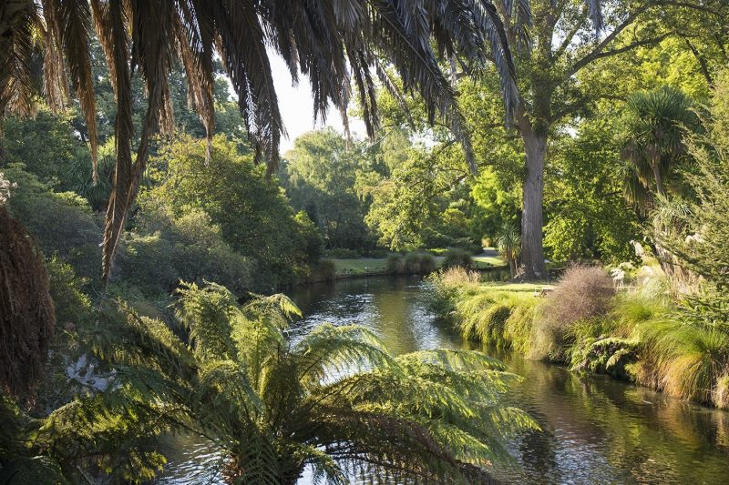 View along the palm-fringed Avon River in Christchurch Botanic Gardens