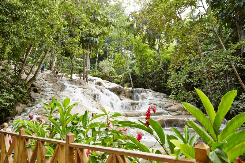 Leafy foliage and water falling at Dunns River Falls in Ochos Rios in Jamaica
