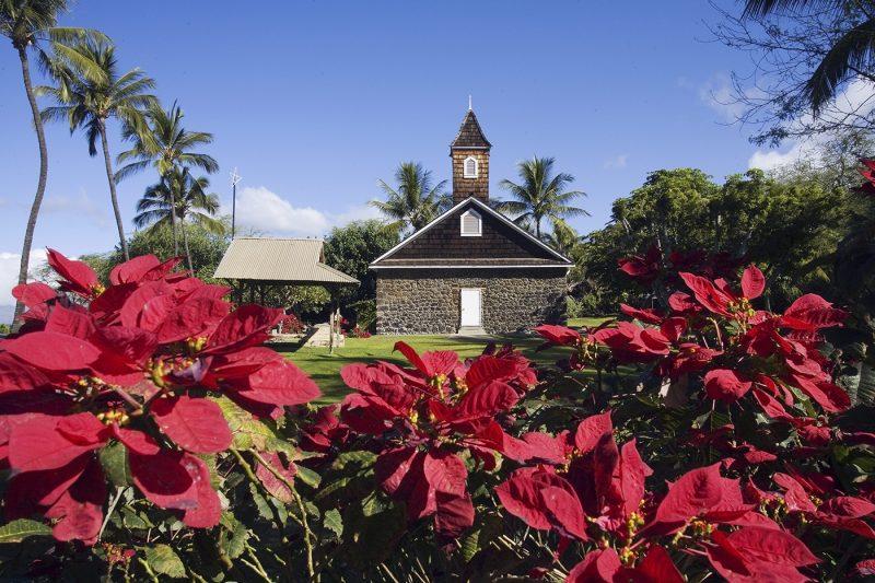 Hawaii Poinsettia flowers