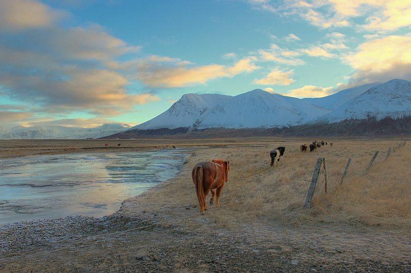 Horse walking on the mountains, Akureyri, Iceland © Andrew Maranta