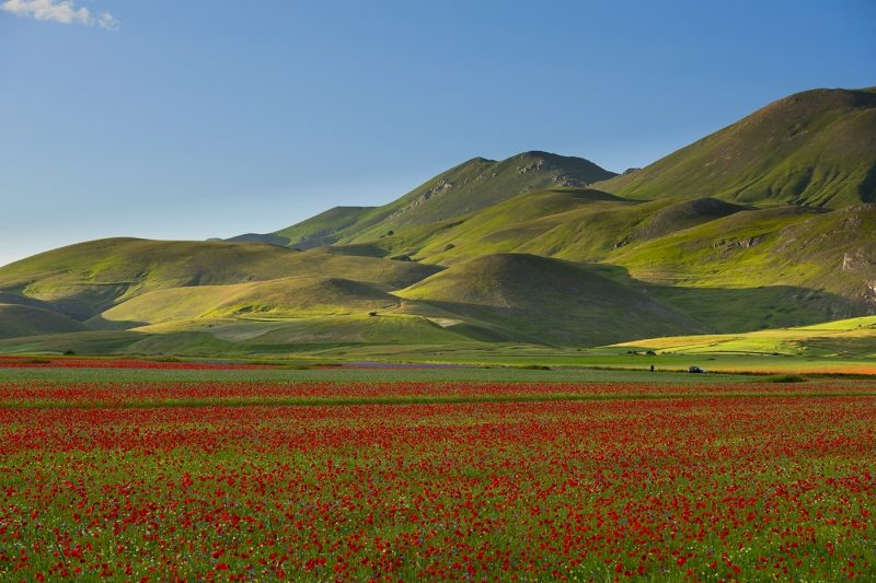 Blooming on Piano Grande di Castelluccio di Norcia