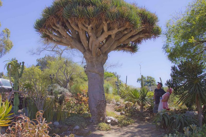 Old World Desert Garden, San Diego Botanic Garden