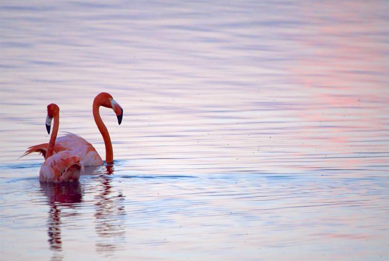 Flamingos in Goto Lake