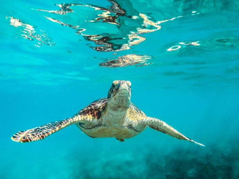 Turtle spotted as part of a dive in Barbados