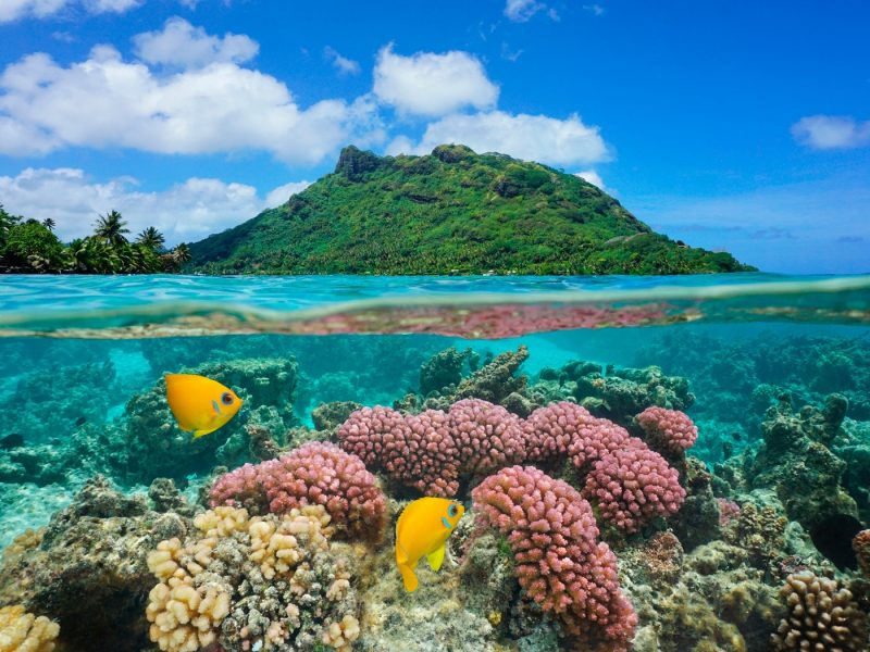 Tropical fish underwater in French Polynesia