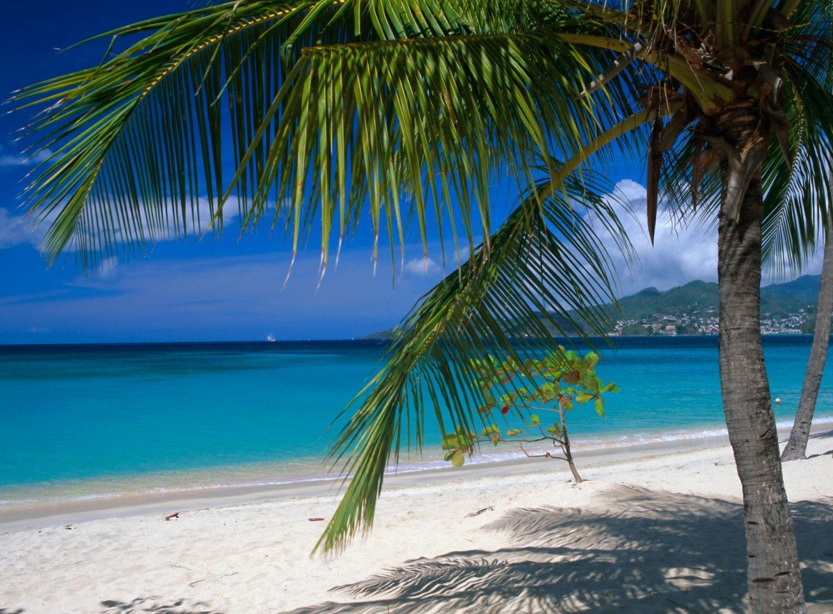 White sand and a palm tree on Grand Anse in Grenada