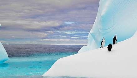 Antarctica Aniamls Hero