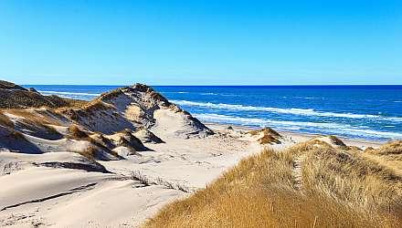 Rabjerg mile Skagen Denmark sand dune